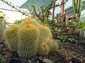 گلخانه کاکتوس دنیای خار در قم. کلکسیون انواع کاکتوس 07.jpg