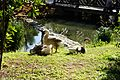 八德埤塘生態園區 Bade Pond Eco Park - panoramio (4).jpg