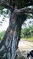 大南山一号营地越野穿越20150822 - panoramio.jpg
