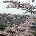 弘川寺・桜山からさくら坂を望む View toward Sakura-zaka 2012.4.13 - panoramio.jpg
