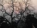 灵泉日落 - panoramio.jpg