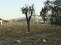 生物园 - Biology Garden - 2010.11 - panoramio.jpg
