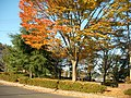 身近に感じる秋 - panoramio.jpg