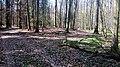01 Grabhügelgruppe im Waldstück Hainbach.jpg