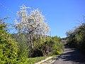 04010 Norma, Province of Latina, Italy - panoramio (5).jpg