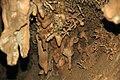 100 Helictites & stalactites 5 (8316561177).jpg