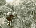 103rd Infantry Regiment soldiers, Battle of New Georgia.png