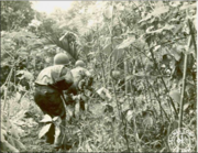 103rd Infantry Regiment soldiers, Battle of New Georgia