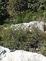 16980 Erenler-Orhaneli-Bursa, Turkey - panoramio (47).jpg