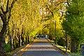 171103 Iwate University Morioka Iwate pref Japan17s3.jpg