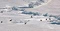 2007 Snow-Hill-Island Luyten-De-Hauwere-Emperor-Penguin-29.jpg