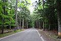 2009-0619-TunnelofTrees.jpg