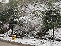 2010年12月15日夜里的那场雪 - panoramio (8).jpg