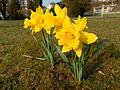 2012-03-23 16-43-42-Parc-Albert-Burrus.jpg
