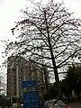 2012 深圳 木棉花 - panoramio.jpg