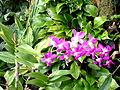 2012 kveten botanicka zahrada 086.jpg