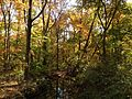 2014-10-30 13 26 28 Trees during autumn in the woodlands along the West Branch Shabakunk Creek in Ewing, New Jersey.JPG