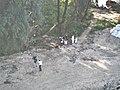 2019-09-05 awaria kolektora oczyszczalni Czajka 26.jpg