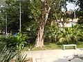 22Mehan Garden Ermita Manila Alexander Pushkin 46.jpg