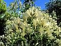 27 Flower Bennetts Point RD Green Pond SC 6854 (12397698573).jpg