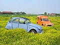 2cv and Acadiane playing in a field - Flickr - Stinoo.jpg