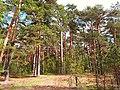 3536. Bolshaya Izhora. Prigorodny Reserve.jpg