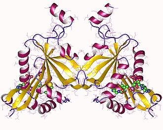 Acetylation - NatF dimer, Human