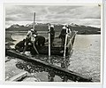 6-65. Homer - Pulling floating dock off beach where it was assembled (25074409342).jpg