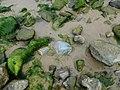8240 Sunny Beach, Bulgaria - panoramio.jpg