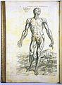 A. Vesalius, De humani corporis fabrica, Wellcome L0021648.jpg