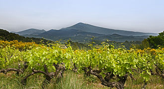 """Résultat de recherche d'images pour """"vigne mont ventoux"""""""