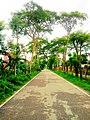 A Green Road.jpg