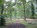 A Walk in Pamber Forest - geograph.org.uk - 63161.jpg