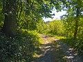 A Walk in Sunny Autumn (30147399935).jpg