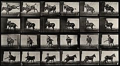 A man falling off a horse. Photogravure after Eadweard Muybr Wellcome V0048759.jpg