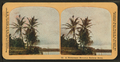 A picturesque Hawaiian railway scene, by H.C. White Co. 2.png