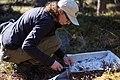 A scientist studies lichen and other vegetation in Denali (447d812d-4e94-47ab-ba86-d59ed7a306a4).jpg
