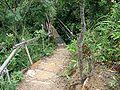 A trail opened by hikers in Jordan Valley.JPG