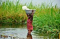 A woman fetching water in the river.jpg
