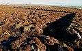 Abandoned Peat Cuttings - geograph.org.uk - 1123633.jpg