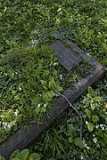 Abandoned tomb reconquered by nature.jpg