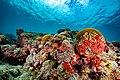 Abrolhos Marine National ParkRobertoCostaPinto22.jpg