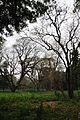 Acharya Jagadish Chandra Bose Indian Botanic Garden - Howrah 2011-02-20 1529.JPG