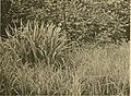 Actes du IIIme Congres international de botanique - Bruxelles 1910 ((1910)-(1912)) (16746622296).jpg