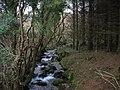 Afon Hen in Cwm-gwared woods - geograph.org.uk - 344917.jpg