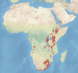 The Distribution of the African Olive Pigeon