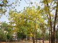 Ahmedabad August2005 1.jpg