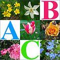 Alfabet roślin - okładka.jpg