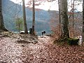 Alpsee - panoramio (8).jpg