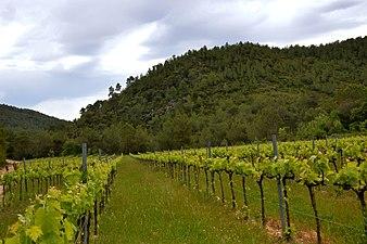 Alt Penedès, vinyes orgàniques de muntanya.jpg
